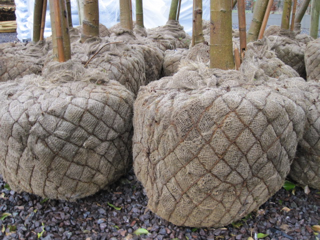 root-ball-trees
